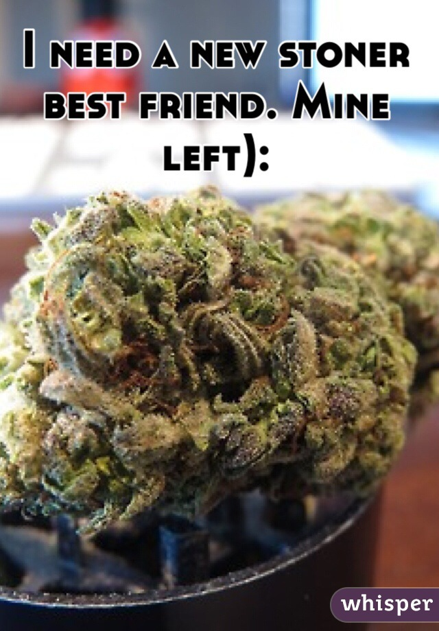 I need a new stoner best friend. Mine left):