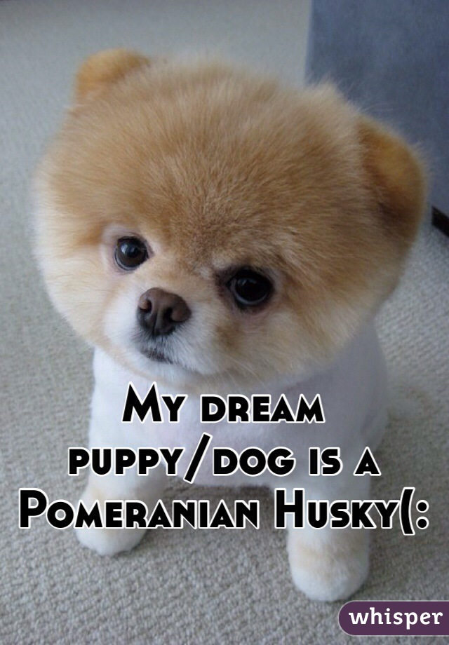 My dream  puppy/dog is a  Pomeranian Husky(: