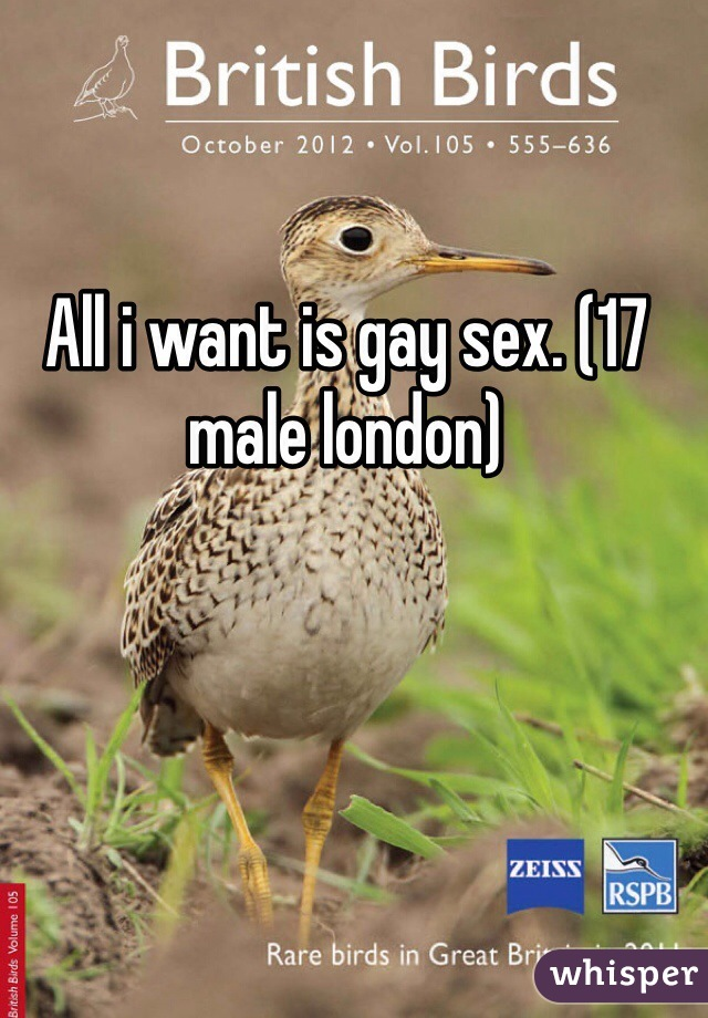 All i want is gay sex. (17 male london)