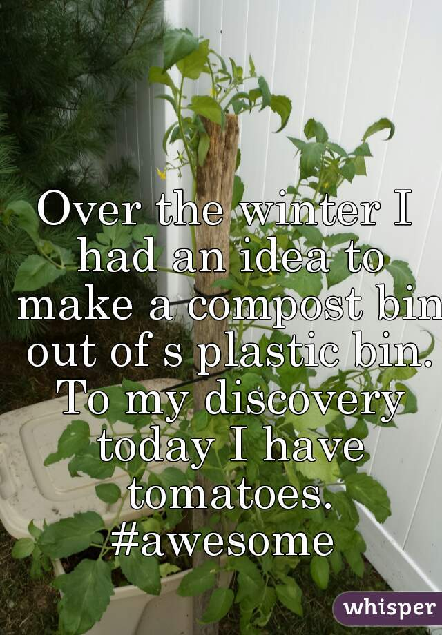 Over the winter I had an idea to make a compost bin out of s plastic bin. To my discovery today I have tomatoes. #awesome