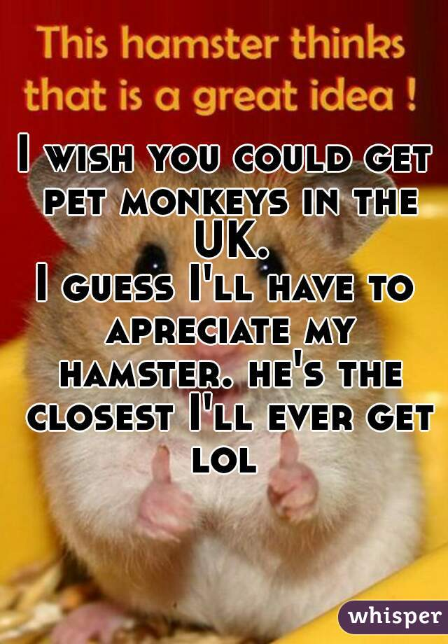 I wish you could get pet monkeys in the UK. I guess I'll have to apreciate my hamster. he's the closest I'll ever get lol