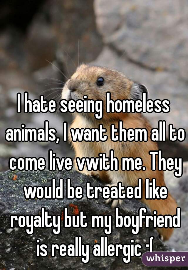 I hate seeing homeless animals, I want them all to come live vwith me. They would be treated like royalty but my boyfriend is really allergic :(
