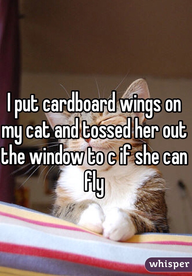 I put cardboard wings on my cat and tossed her out the window to c if she can fly