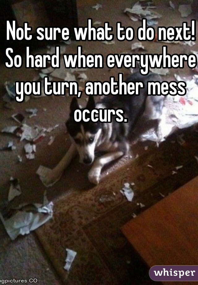 Not sure what to do next!  So hard when everywhere you turn, another mess occurs.