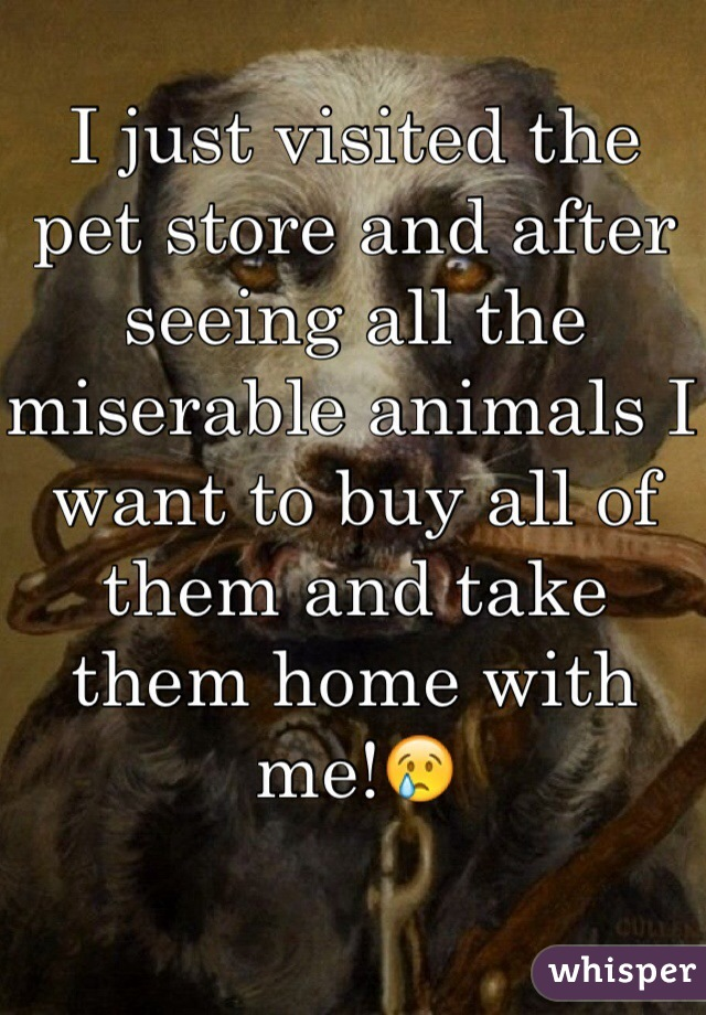 I just visited the pet store and after seeing all the miserable animals I want to buy all of them and take them home with me!😢