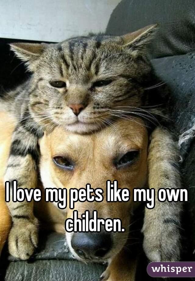 I love my pets like my own children.