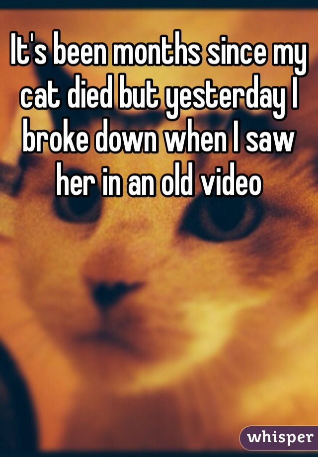 It's been months since my cat died but yesterday I broke down when I saw her in an old video