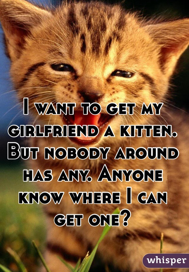 I want to get my girlfriend a kitten. But nobody around has any. Anyone know where I can get one?