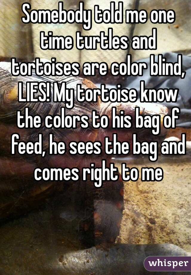 Somebody told me one time turtles and tortoises are color blind, LIES! My tortoise know the colors to his bag of feed, he sees the bag and comes right to me