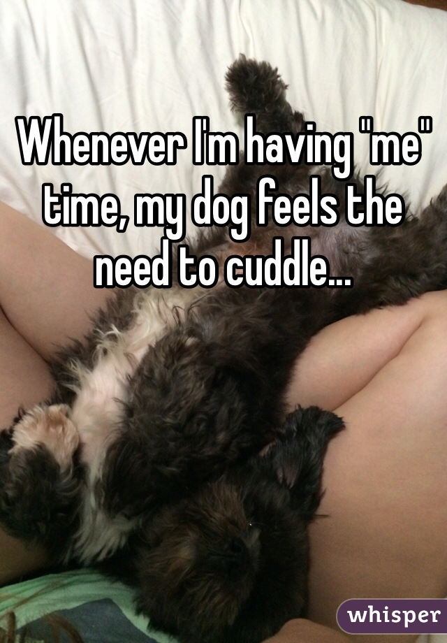 """Whenever I'm having """"me"""" time, my dog feels the need to cuddle..."""