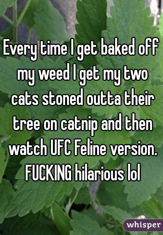 Every time I get baked off my weed I get my two cats stoned outta their tree on catnip and then watch UFC Feline version. FUCKING hilarious lol