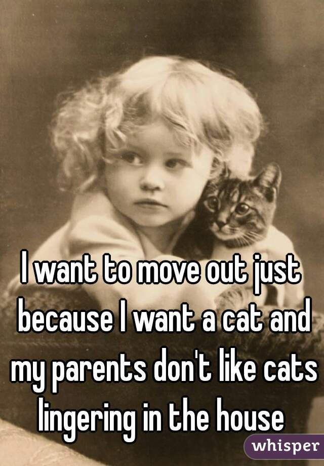 I want to move out just because I want a cat and my parents don't like cats lingering in the house