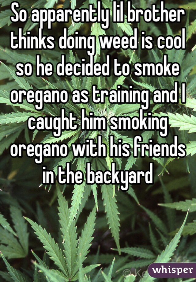 So apparently lil brother thinks doing weed is cool so he decided to smoke oregano as training and I caught him smoking oregano with his friends in the backyard