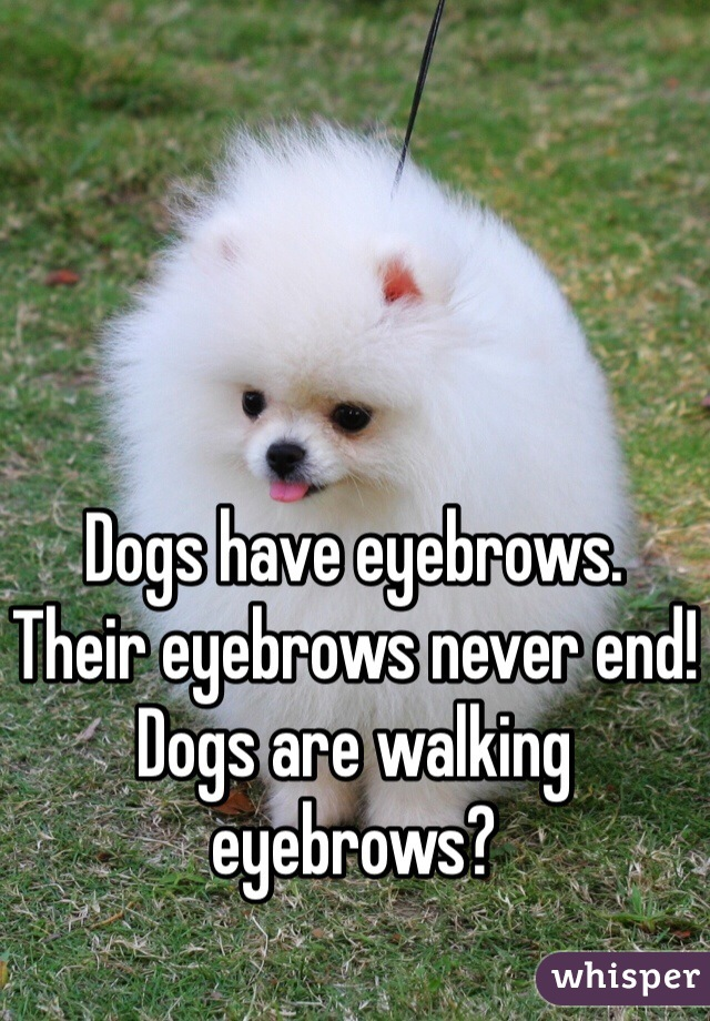 Dogs have eyebrows. Their eyebrows never end! Dogs are walking eyebrows?