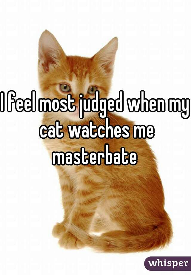I feel most judged when my cat watches me masterbate