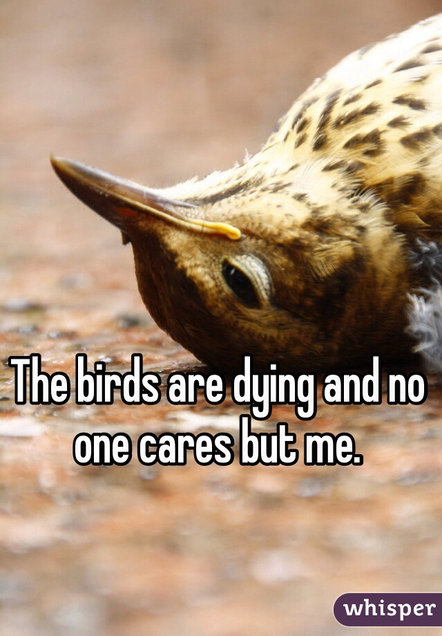 The birds are dying and no one cares but me.