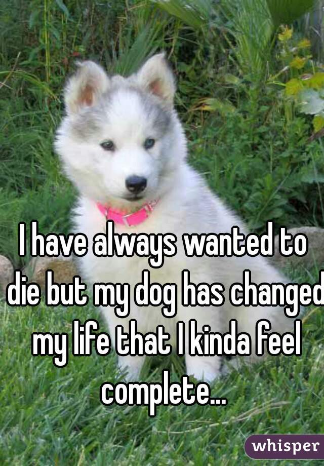 I have always wanted to die but my dog has changed my life that I kinda feel complete...