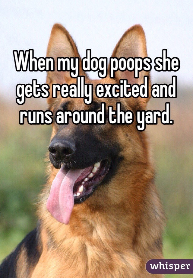 When my dog poops she gets really excited and runs around the yard.