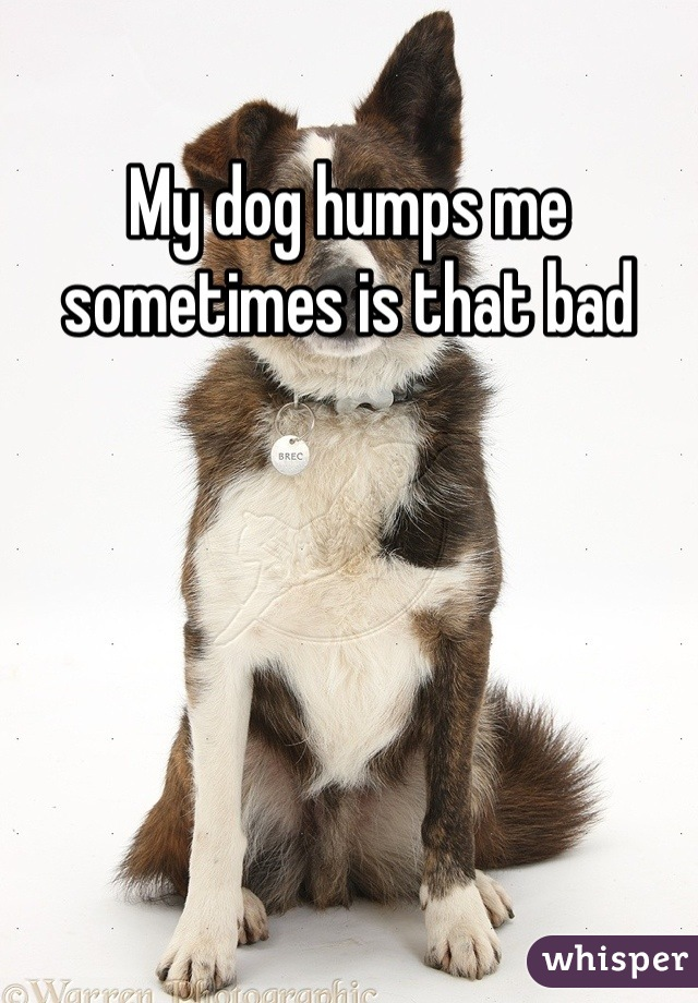 My dog humps me sometimes is that bad