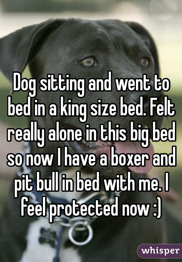 Dog sitting and went to bed in a king size bed. Felt really alone in this big bed so now I have a boxer and pit bull in bed with me. I feel protected now :)