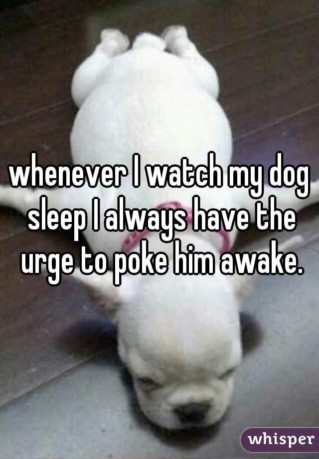whenever I watch my dog sleep I always have the urge to poke him awake.