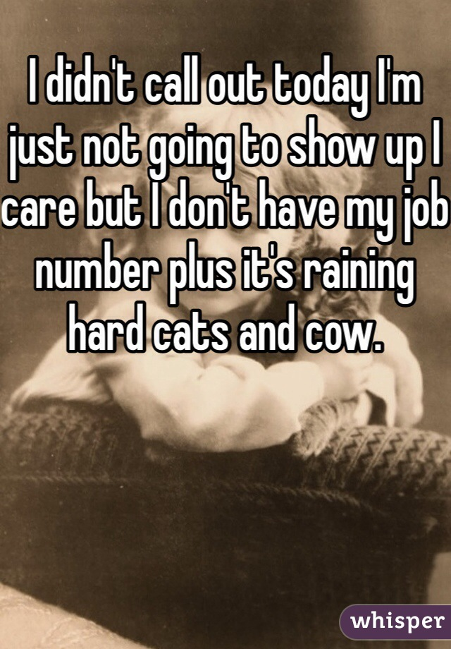 I didn't call out today I'm just not going to show up I care but I don't have my job number plus it's raining hard cats and cow.