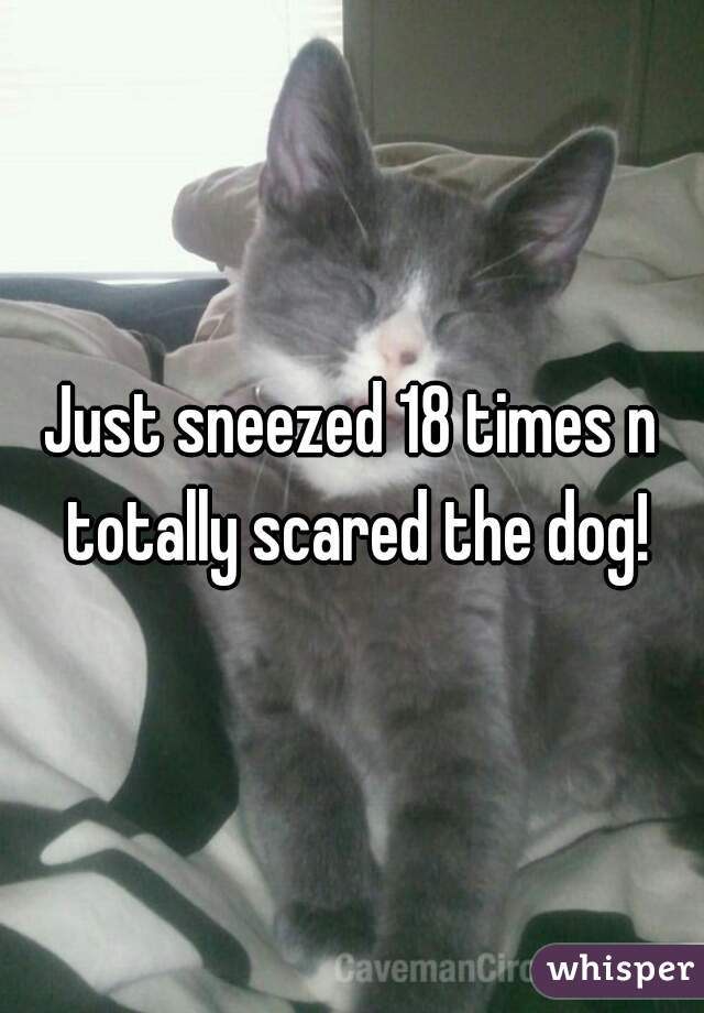 Just sneezed 18 times n totally scared the dog!