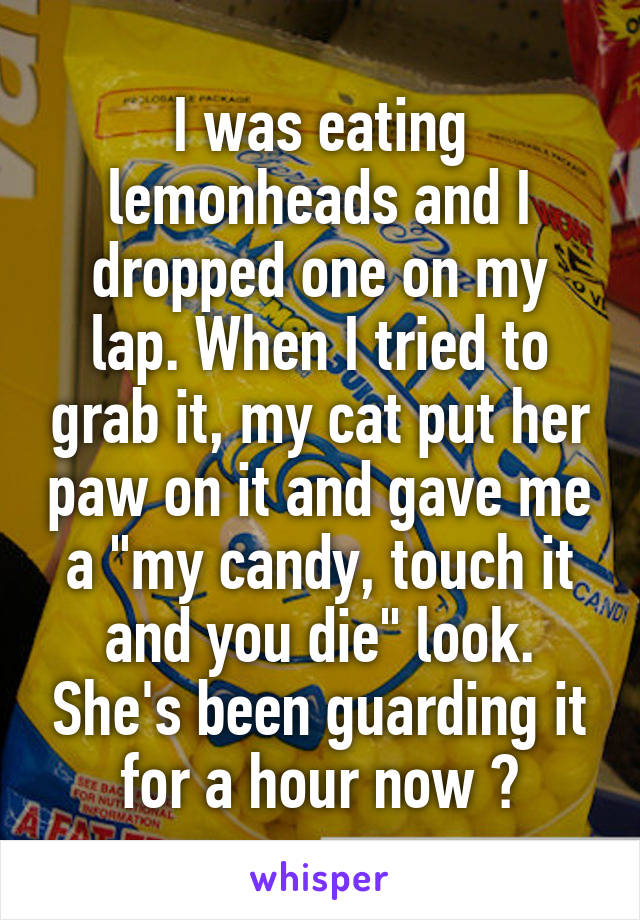 """I was eating lemonheads and I dropped one on my lap. When I tried to grab it, my cat put her paw on it and gave me a """"my candy, touch it and you die"""" look. She's been guarding it for a hour now 😂"""