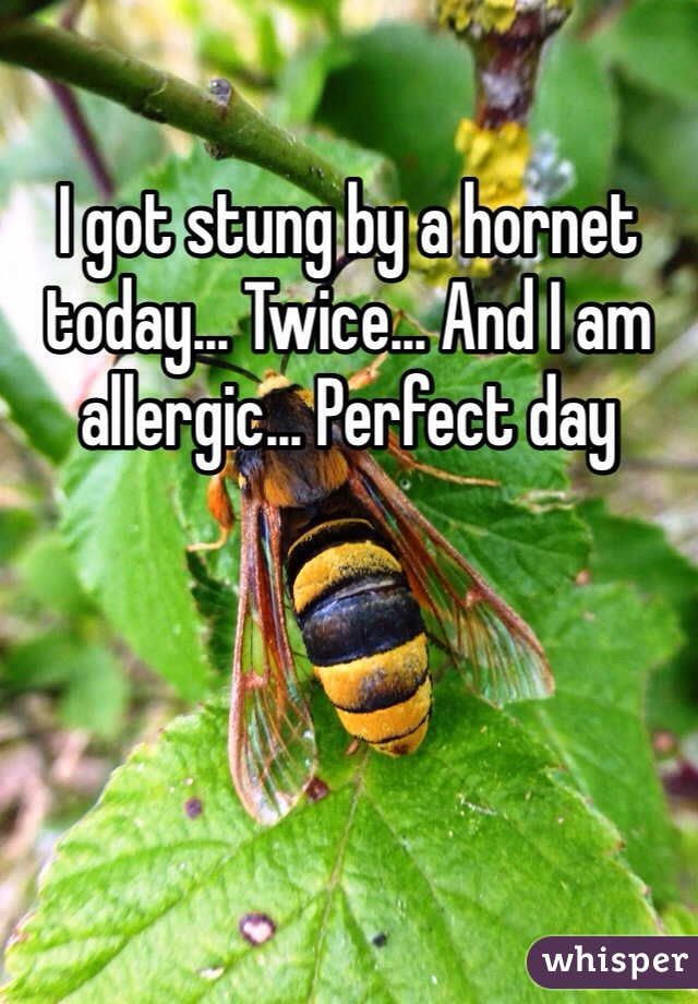 I got stung by a hornet today... Twice... And I am allergic... Perfect day