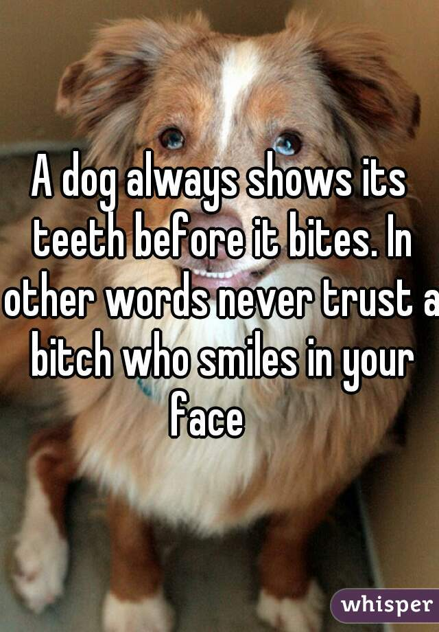 other words for dog