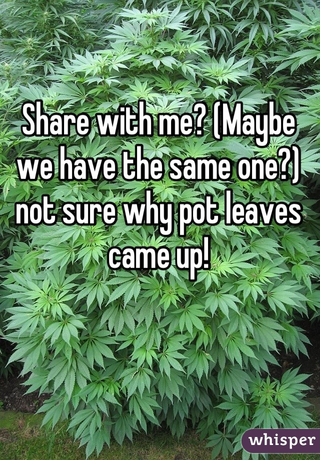 Share with me? (Maybe we have the same one?) not sure why pot leaves came up!