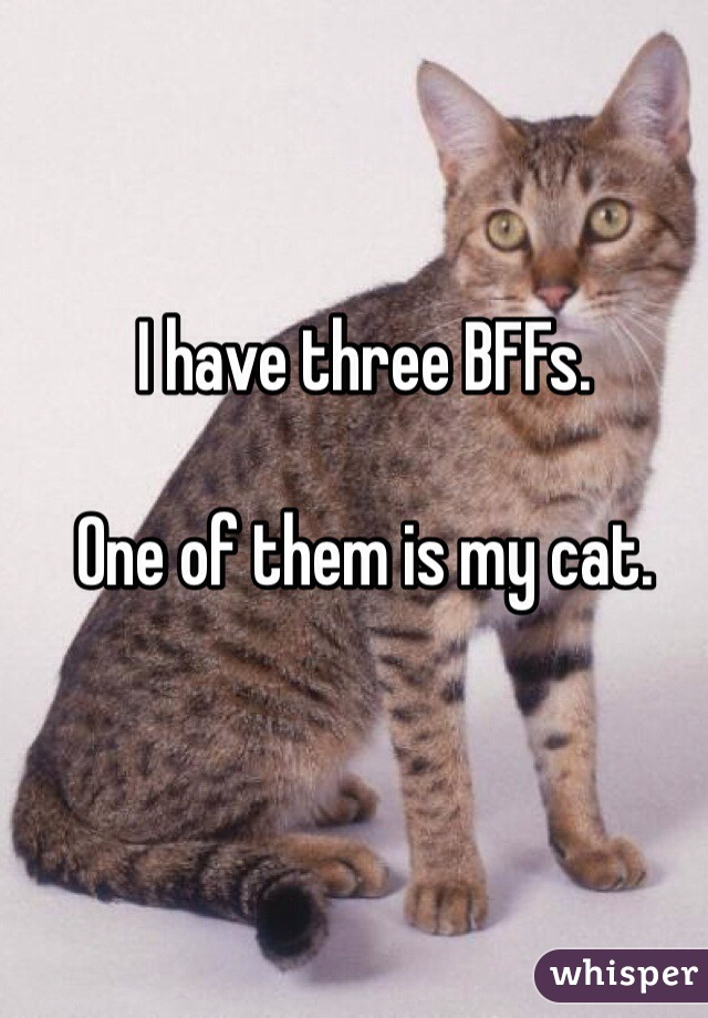 I have three BFFs.  One of them is my cat.