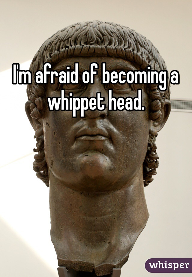 I'm afraid of becoming a whippet head.