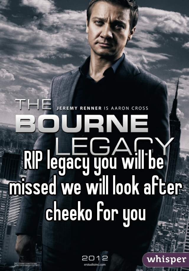 RIP legacy you will be missed we will look after cheeko for you