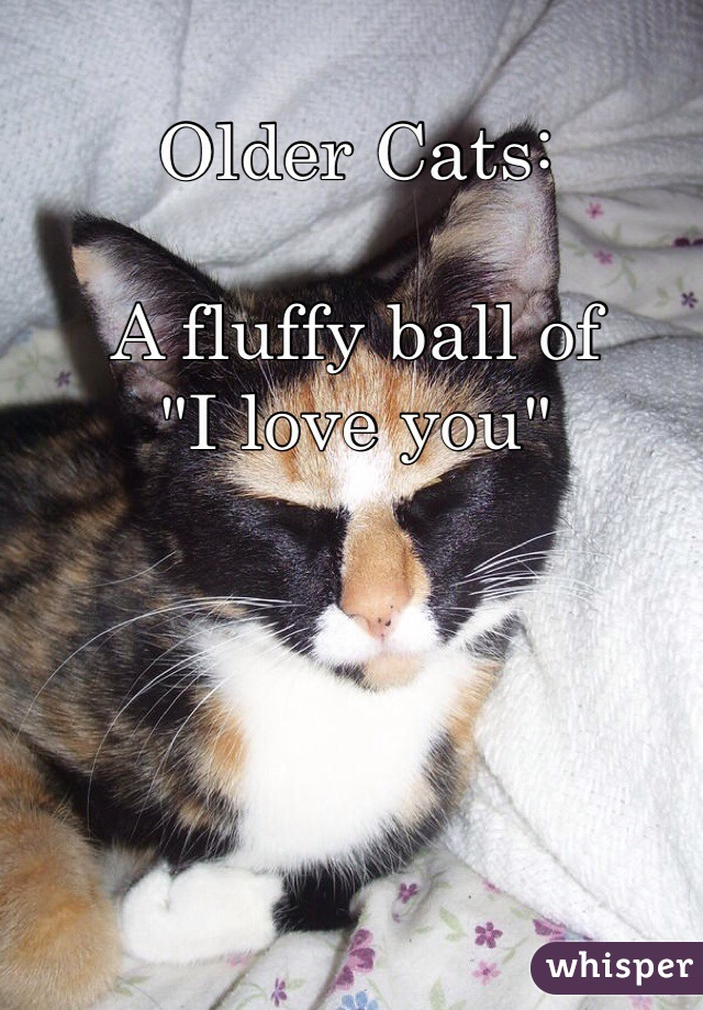 """Older Cats:  A fluffy ball of """"I love you"""""""