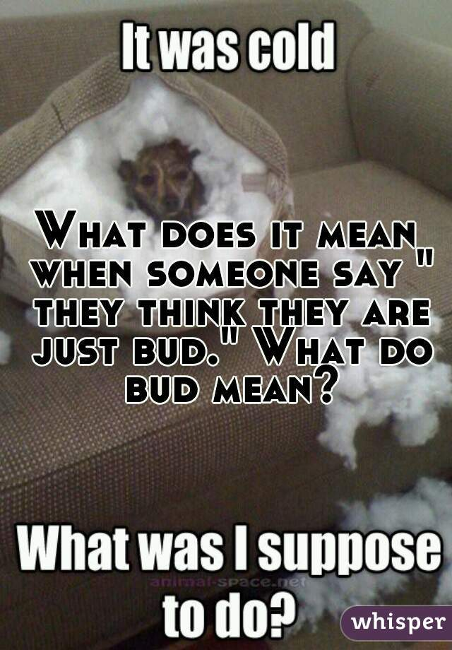 """What does it mean when someone say """" they think they are just bud."""" What do bud mean?"""