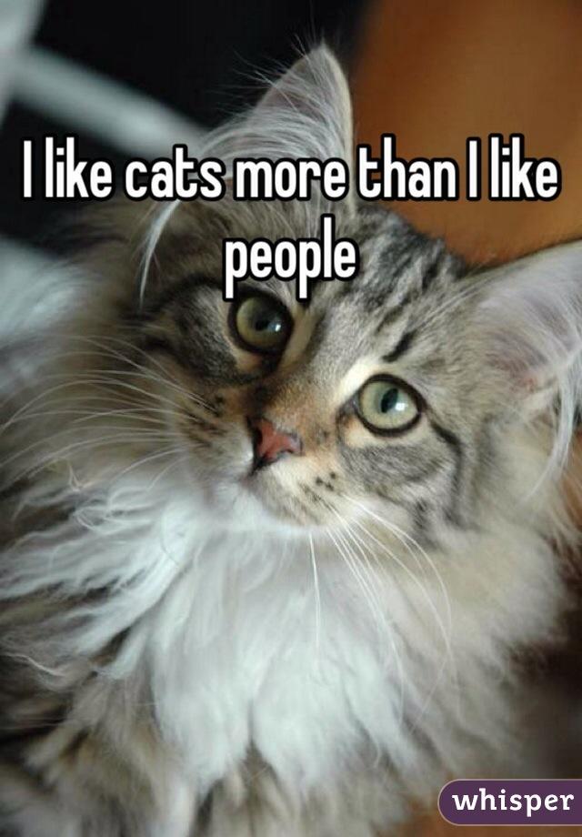 I like cats more than I like people
