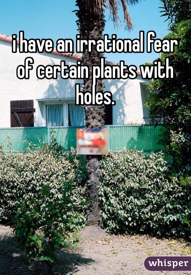 i have an irrational fear of certain plants with holes.