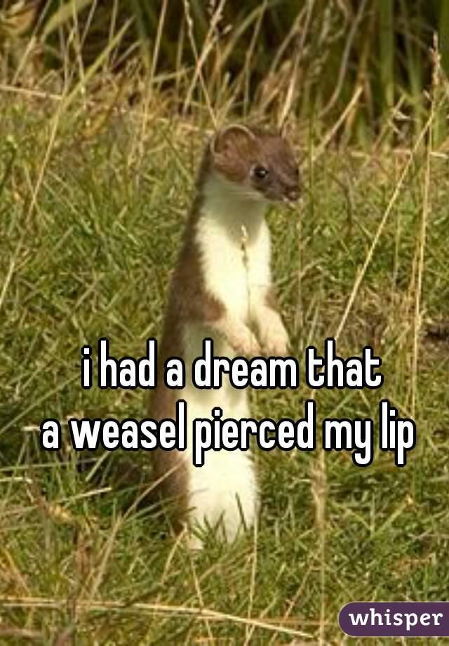 i had a dream that  a weasel pierced my lip