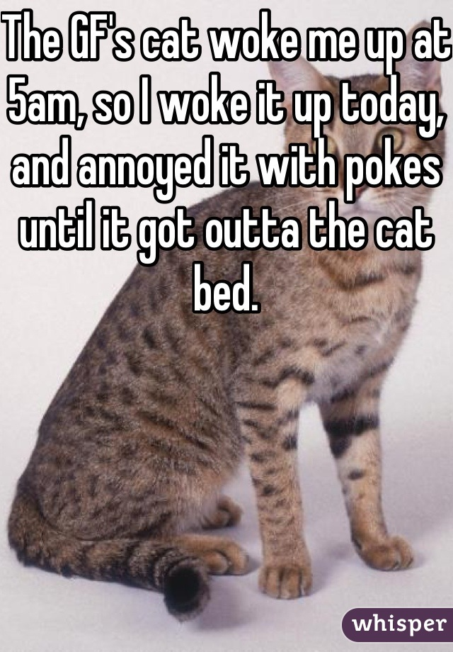 The GF's cat woke me up at 5am, so I woke it up today, and annoyed it with pokes until it got outta the cat bed.