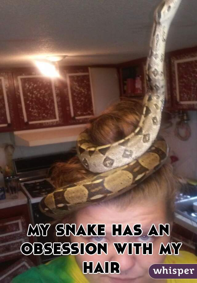 my snake has an obsession with my hair