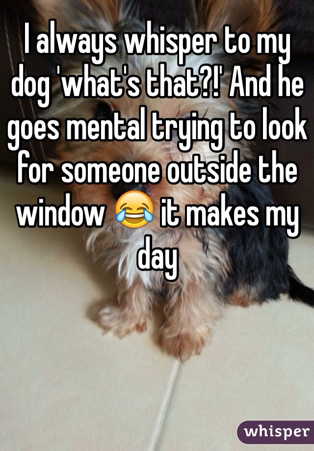 I always whisper to my dog 'what's that?!' And he goes mental trying to look for someone outside the window 😂 it makes my day