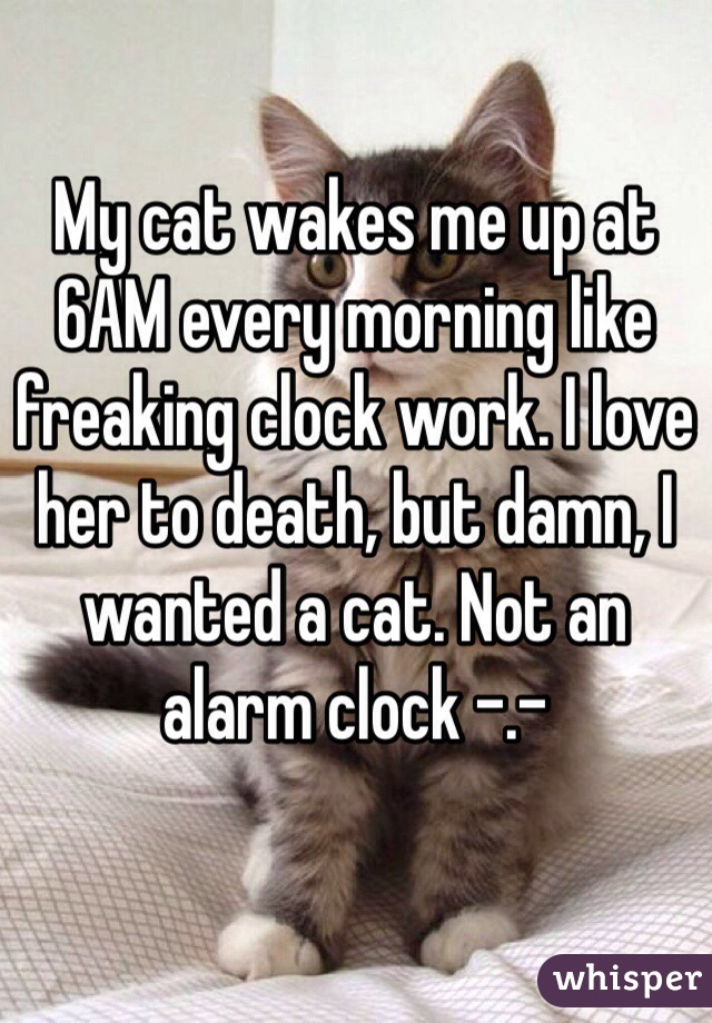 My cat wakes me up at 6AM every morning like freaking clock work. I love her to death, but damn, I wanted a cat. Not an alarm clock -.-