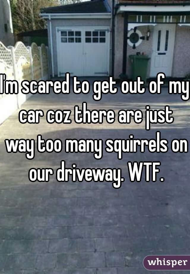 I'm scared to get out of my car coz there are just way too many squirrels on our driveway. WTF.