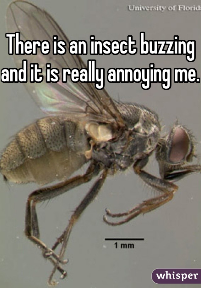 There is an insect buzzing and it is really annoying me.
