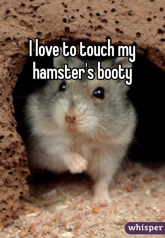 I love to touch my hamster's booty