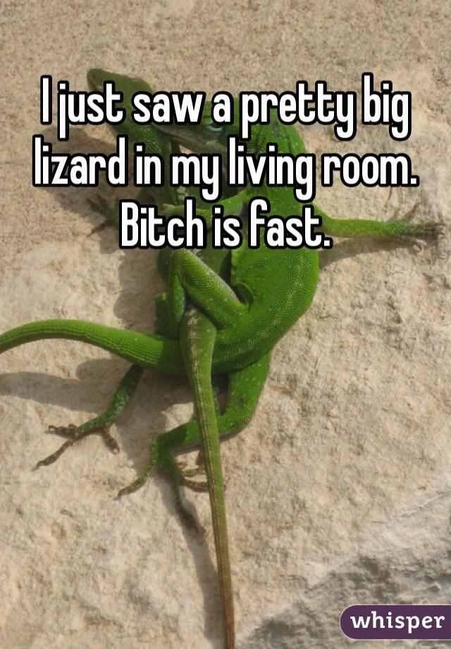 I just saw a pretty big lizard in my living room. Bitch is fast.