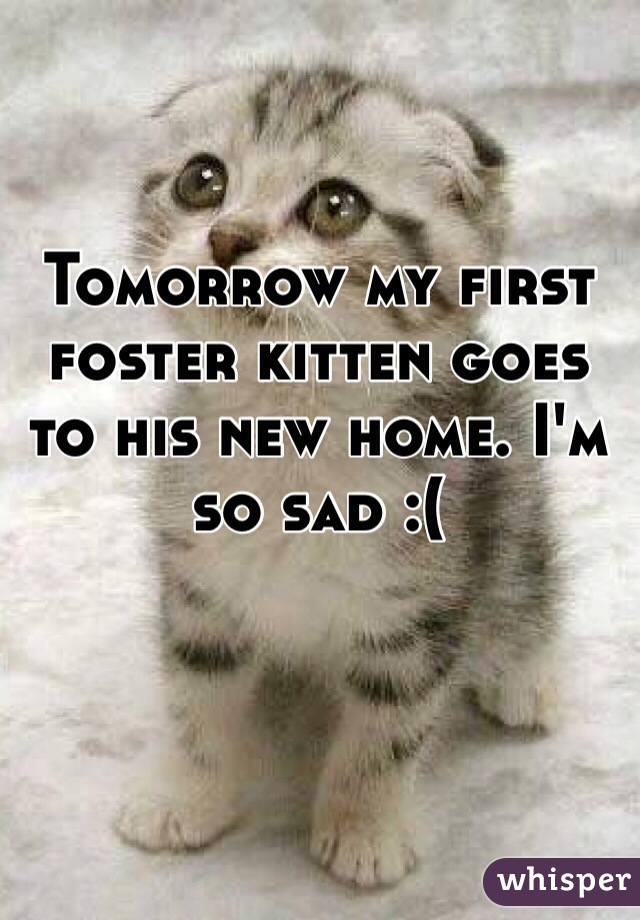 Tomorrow my first foster kitten goes to his new home. I'm so sad :(