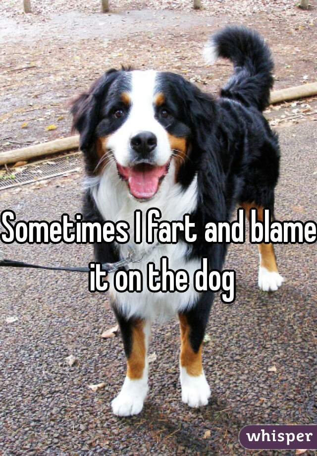 Sometimes I fart and blame it on the dog