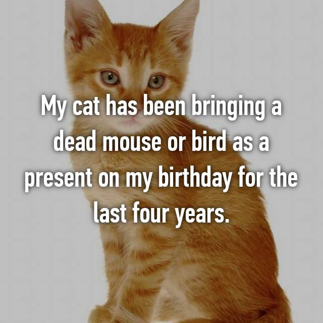 My cat has been bringing a dead mouse or bird as a present on my birthday for the last four years.
